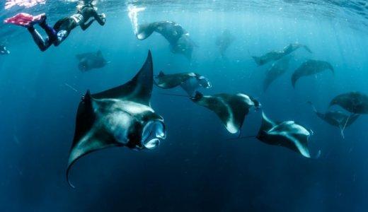 【保存版】防水カメラおすすめレンタル業者7社を比較!ダイビングやシュノーケルなどで利用するなら送料無料や空港受け取りが人気!